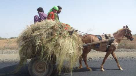 00 Riding on a hay wagon Back from Bhuj 5 16 (39)